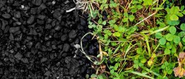 Фото концепции угля и травы Стоковые Фотографии RF