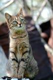 Фото кота Стоковые Изображения