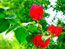 фото красивейших цветков бумажное очень Стоковые Фотографии RF