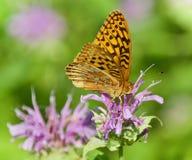 Фото красивой бабочки сидя на цветках Стоковое Фото