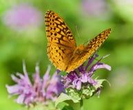 Фото красивой бабочки сидя на цветках Стоковые Фотографии RF