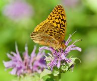 Фото красивой бабочки сидя на цветках Стоковые Изображения RF