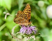 Фото красивой бабочки сидя на цветках Стоковая Фотография RF
