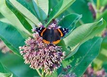 Фото красивой бабочки сидя на цветках Стоковая Фотография