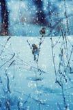 Фото красивой птицы на ветви в зиме Стоковые Фото