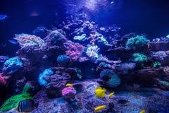 Фото красивых рыб. Стоковое Фото