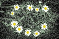 фото красивых стоцветов лета Стоковая Фотография RF