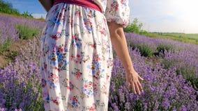 Фото крупного плана молодой женщины идя на поле лаванды и касающие цветки с рукой Стоковое Фото