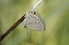 Фото крупного плана бабочки Стоковая Фотография RF