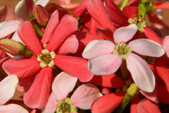 Фото крупного плана полевые цветки Стоковое Изображение