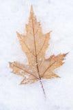 Фото кленового листа на крупном плане снега Стоковое Изображение