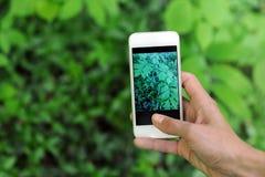 Фото листьев Стоковая Фотография RF
