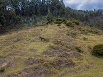 Фото лошадей воздушное в лесе стоковое фото rf
