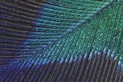 Фото макроса детали пера павлина Стоковое Изображение RF