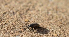 Фото макроса жука долгоносика на конкретном снаружи Стоковое фото RF