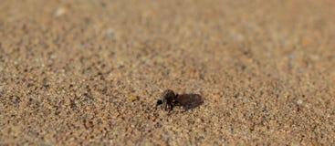 Фото макроса жука долгоносика на конкретном снаружи Стоковые Изображения