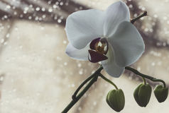 Фото макроса и конца-вверх орхидеи стоковые изображения rf