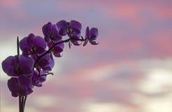 Фото макроса и конца-вверх орхидеи стоковая фотография