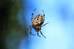 Фото макроса конца-вверх паука Паук соткет сеть паука Конец-вверх Araneus сидит на паутине Фото diadematus Araneus Стоковое Фото
