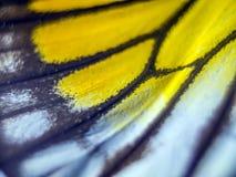 Фото макроса крыла бабочки Стоковая Фотография RF