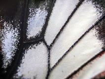Фото макроса крыла бабочки Стоковое Фото