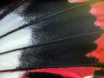 Фото макроса крыла бабочки Стоковое Изображение RF