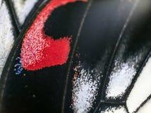 Фото макроса крыла бабочки Стоковые Изображения RF