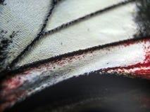 Фото макроса крыла бабочки Стоковая Фотография