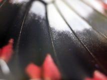 Фото макроса крыла бабочки Стоковое фото RF