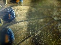 Фото макроса крыла бабочки Стоковые Фотографии RF
