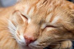 Фото макроса молодого красного striped кота спать Стоковая Фотография RF