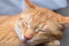 Фото макроса молодого красного striped кота спать Стоковое фото RF