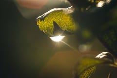 Фото макроса падения воды на зеленых лист стоковые фото