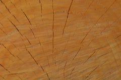 Фото макроса свежо отрезанного дерева, показывая текстуру древесины Мягкие теплые цвета деревянных и точных деталей своей структу стоковые изображения rf