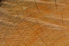 Фото макроса свежо отрезанного дерева, показывая текстуру древесины Мягкие теплые цвета деревянных и точных деталей своей структу стоковые фото