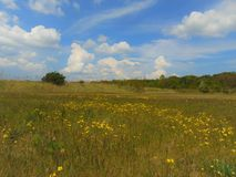Фото макроса с декоративным фоном ландшафта сельских злаковиков и вегетацией в лете теплый солнечный день Стоковое Изображение RF