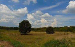 Фото макроса с декоративным фоном ландшафта сельской местности на летний день Стоковые Фотографии RF
