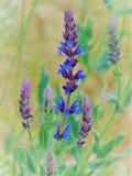 Фото макроса с лепестками цветка декоративной текстуры предпосылки красивыми голубыми в лесе одичалом стоковое фото rf