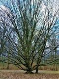 Фото макроса с предпосылкой мартом ландшафта первые весенние дни в парке с декоративными деревьями Стоковое Изображение RF