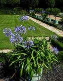 Фото макроса с предпосылкой поразительных декоративных элементов дизайна ландшафта парка Стоковое фото RF