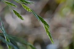 Фото макроса травинки против мягко defocused предпосылки Мягкие естественные цвета и точные детали травы стоковые изображения rf