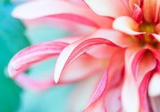 Фото макроса флористическое Стоковые Изображения