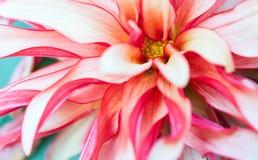 Фото макроса флористическое Стоковая Фотография RF