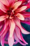 Фото макроса флористическое Стоковые Фото