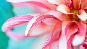 Фото макроса флористическое Стоковое Фото