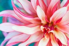 Фото макроса флористическое Стоковое Изображение