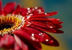 Фото макроса цветка Стоковое Изображение