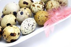 Фото малых сырых яичек триперсток и розовых пер в белой плите фарфора на таблице Фото яичек триперсток, пасха деревенская Стоковое Фото