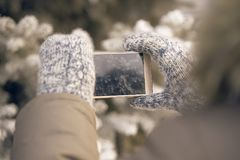 Фото на телефоне Теплые mittens Ветвь спруса armourer стоковые фото