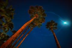 Фото ночи пальм, звезды и луна светят стоковые изображения rf